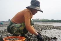 Hà Tĩnh: Hàng chục tấn ngao bị chết trắng đầm
