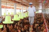 Xuất hiện ổ dịch cúm gia cầm A/H5N6 tại Hòa Bình