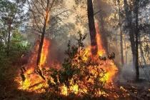Nghệ An: Hơn 1.000 người căng mình dập cháy rừng trong đêm