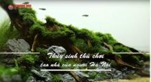 Thủy sinh - thú chơi tao nhã của người Hà Nội