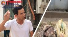 Xã Cẩm Yên- Thạch Thất - Hà Nội: Người dân búc xúc vì hàng loạt cây xanh bị đốn chặt bừa bãi