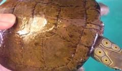 Quảng Ninh: Tạm giữ đối tượng vận chuyển rùa 4 mắt và rùa trán vàng quý hiếm