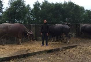 Hà Tĩnh: Bắt đối tượng dùng xe tải trộm 8 con trâu đi bán