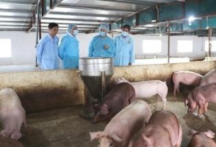Phát hiện dịch tả lợn châu Phi tại Long An