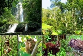 Thành lập Hội đồng thẩm định nhiệm vụ lập Quy hoạch bảo tồn đa dạng sinh học quốc gia