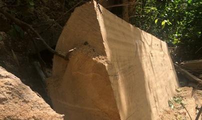 """Vụ khai thác gỗ trong vùng lõi khu Bảo tồn thiên nhiên Nam Kar: Ai đã """"bán"""" rừng cho """"lâm tặc""""?"""