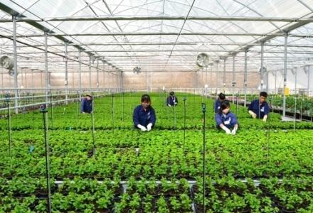 Việt Nam sẽ có 100.000 doanh nghiệp nông nghiệp vào năm 2030