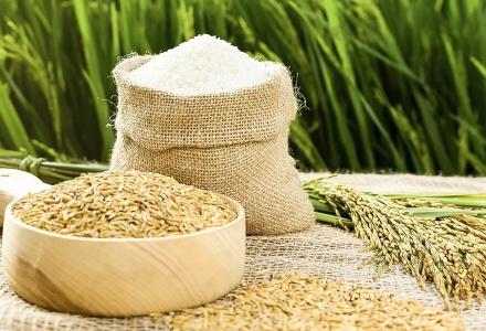 Xuất khẩu gạo Việt Nam tăng mạnh cả về lượng và giá trị