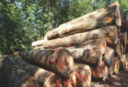 Tạm ngừng nhập, tái xuất gỗ rừng tự nhiên từ Lào, Campuchia