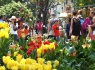 TP.HCM: Sẽ tổ chức chợ Hoa Tết tại 3 công viên lớn của thành phố