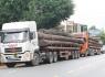 Quảng Nam: Bắt giữ 4 xe container vận chuyển hàng chục cây 'khủng'
