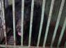 Phúc Thọ, Hà Nội: Ký tên kêu gọi chấm dứt nuôi, nhốt gấu