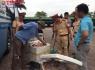 Kỳ Anh - Hà Tĩnh: Phát hiện xe khách chở 200kg thịt lợn không rõ nguồn gốc