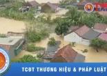 Lũ lụt miền Trung: Mất mát và đau thương!