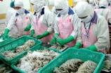 Kim ngạch xuất khẩu tôm sang Trung Quốc năm nay dự kiến tăng 7%