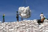 Lượng gạo nhập khẩu từ Ấn Độ về Việt Nam tăng mạnh