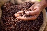 Bảng giá cà phê và hồ tiêu ngày 22/9/2021