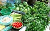 Thị trường rau xanh tăng giá mạnh giữa mùa dịch