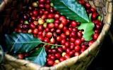Giá cà phê tăng mạnh, hồ tiêu giữ nguyên mức 47.000 - 49.500 đồng/kg