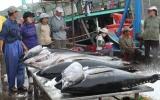 Xuất khẩu cá ngừ sang Ai Cập đạt 11,9 triệu USD