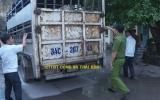 Thái Bình: Bắt xe tải vận chuyển hơn 1,4 tấn lợn nhiễm dịch tả lợn Châu Phi