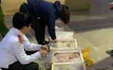Thanh Hóa: Bắt xe tải trở cá khoai ngâm hóa chất độc lại
