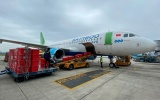 Bamboo Airways sẵn sàng vận chuyển vaccine COVID-19