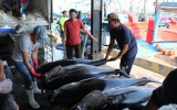 Xuất khẩu cá ngừ sang Canada tăng mạnh