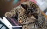 Ứng dụng giải mã cảm xúc vật nuôi