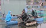 Khẩn trương khắc phục hậu quả bão số 5 và ứng phó với mưa lũ