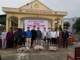 Nhóm thiện nguyện Từ Hiếu Tâm: Trao 150 con lợn giống cho bà con vùng bão lũ