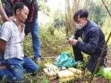 Quảng Bình: Bắt đối tượng người Lào vận chuyển ma túy qua biên giới