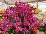 Chợ hoa Xuân Vạn Phúc: Lượng khách giảm nhiều so với mọi năm