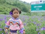 Nam Dược – Con đường dược liệu sạch chuẩn hóa, nâng tầm Thương hiệu quốc gia