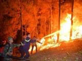 Tạm giữ người đàn ông nghi vấn có liên quan vụ cháy rừng ở Hà Tĩnh