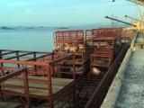Quảng Ninh: Tiêu hủy 7 tấn lợn chết trên tàu chở hàng
