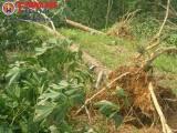 Quảng Trị hứng chịu thiệt hại nặng do cơn bão số 10
