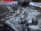 Nhà máy chế biến gỗ Nghệ An xả thải gây ô nhiễm môi trường?