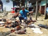 TP.HCM: 4 người nhập viện, vật nuôi chết la liệt vì rò rỉ khí amoniac