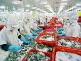 Xuất khẩu tôm sang châu Âu tăng trưởng mạnh