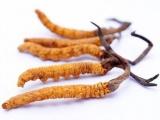 Việt Nam đạt thành công vượt bậc về đông trùng hạ thảo