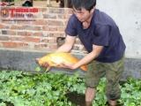 Bắc Kạn: Thành công nhờ chuyển đổi mô hình chăn nuôi hiệu quả