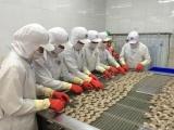 Mỹ, Canada tăng nhập khẩu tôm Việt Nam