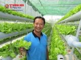 Bỏ việc thị thành về đồng hành với sản xuất rau sạch