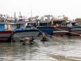 Khai thác tàu thuyền quá niên hạn sẽ bị xử phạt nặng