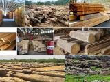 """Tương lai """"xanh"""" cho ngành gỗ Việt nếu đảm bảo nguồn cung"""