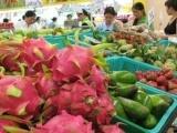 Xuất khẩu rau quả sang Trung Quốc tăng mạnh