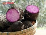 Vĩnh Long: Làm giàu từ trồng khoai mỡ
