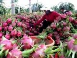 Việt Nam có thể sẽ xuất khẩu trái cây sang Qatar
