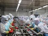 Mỹ giảm thuế chống bán phá giá đối với tôm Việt Nam